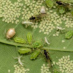 بیماریهای مهم گیاهی