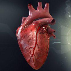 امروزه با توجه به نوع تغذیه و سبک زندگی مردم شاهد افزایش بیماری های قلبی هستیم. کم تحرکی و مصرف غذاهای چرب و مضر از عوامل تاثیرگذار در ابتلا به نارسایی های قلبی می باشند.