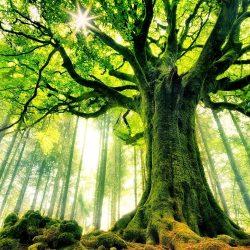 درخت و زندگی