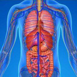 7 قسمت حساس بدن ما و چگونگی مراقبت از آنها