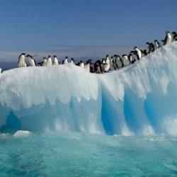 یخچال ها
