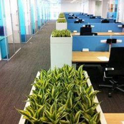 گیاهان مناسب برای محل کار